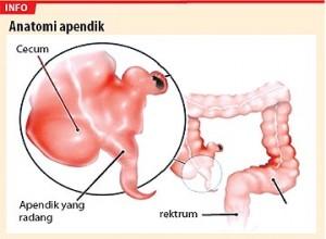 apendiks