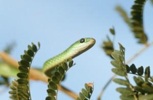 kenapa takut ular