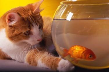 ikan dan kucing