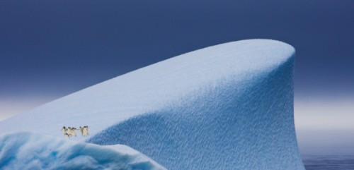 Penguin penghuni kutub