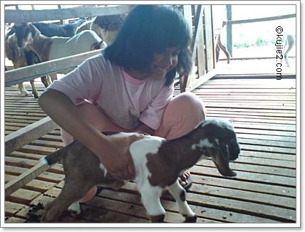 Kenali Sifat Binatang Dalam Diri Kita