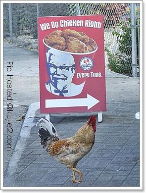 Catwalk Bapa Ayam
