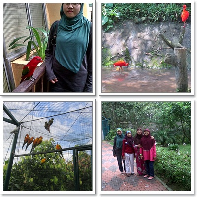 Berlagak Macam Merak Di Taman Burung Kuala Lumpur