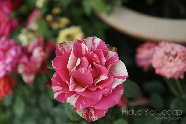 bunga di pesta floria putrajaya