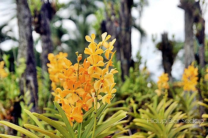 orkid cantik
