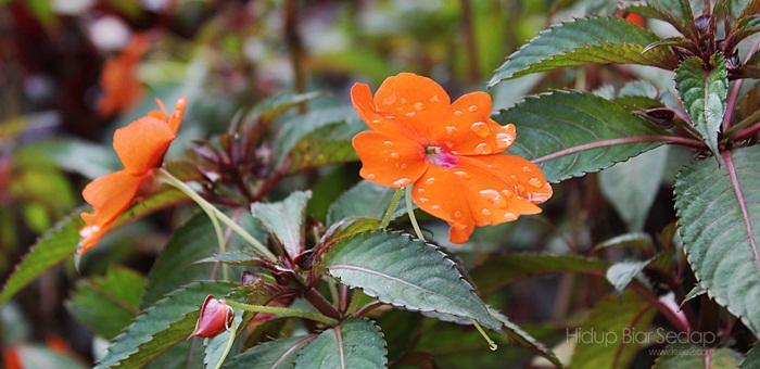 jenis bunga di bukit fraser