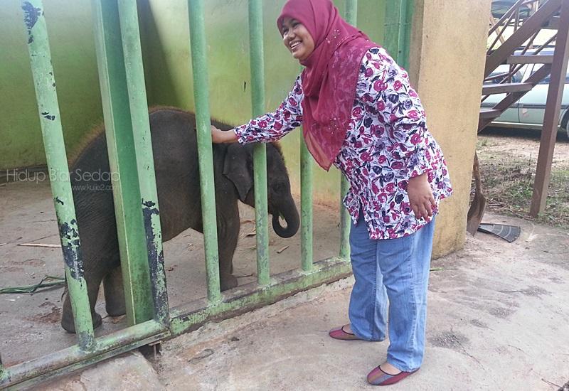 anak gajah baru lahir