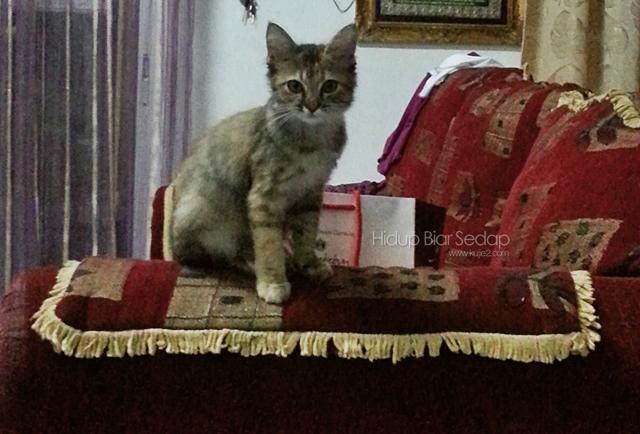 Harga Ubat Kucing Di Klinik Kerajaan