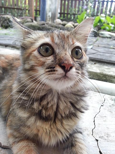 Kucing Saya Sakit, Nak Buat Apa?