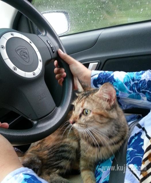 bawa kucing naik kereta