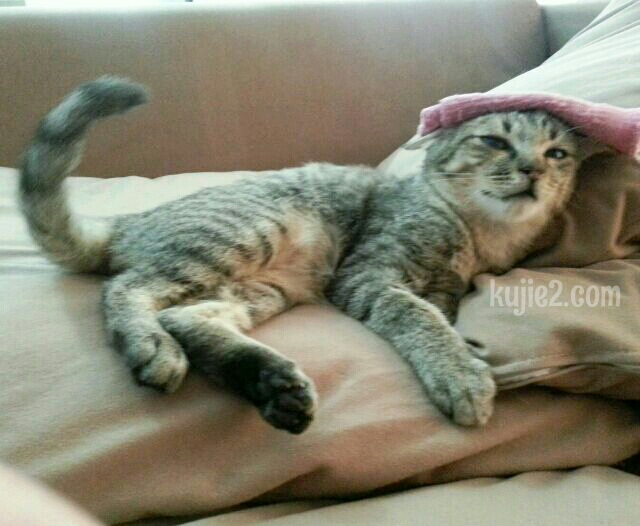 Cara Ubat Kucing Demam