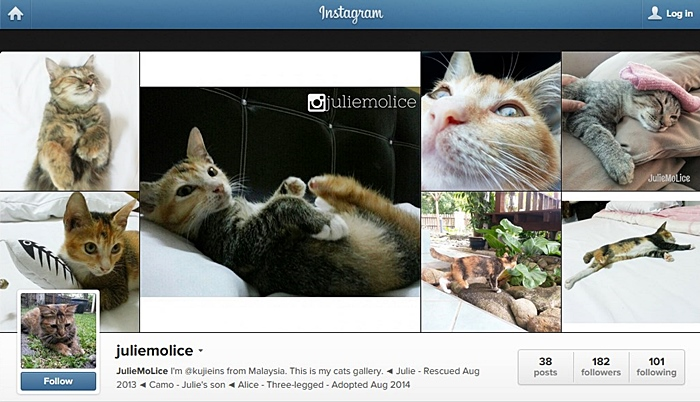 instagram kucing