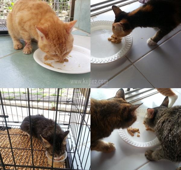 Buat Sendiri Makanan Basah Kucing Yang Sedap Berkhasiat