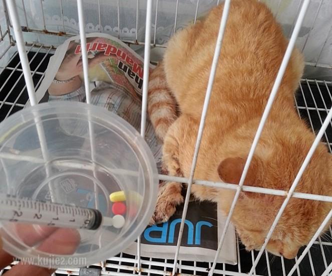 ubat kucing sakit