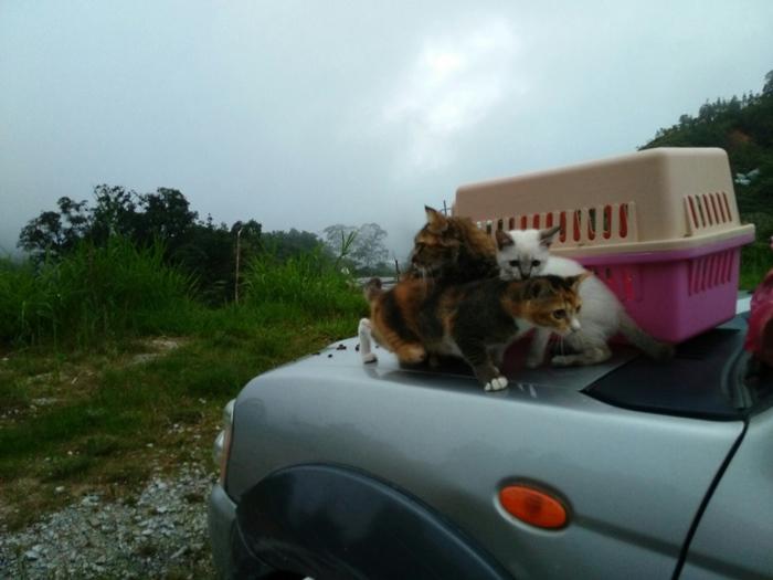 Lokasi Kini – Empangan Puah Hulu Terengganu