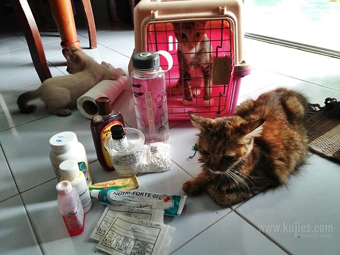 baca kucing bercuti