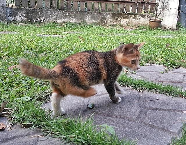 kucing kudungaliceku