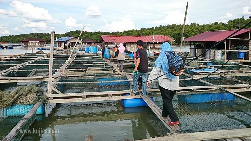 kelong ternak ikan teluk bayu