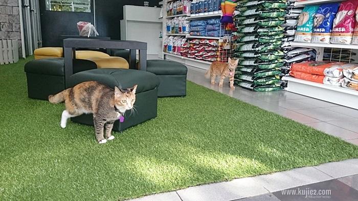 cat boardingCATBOARDING