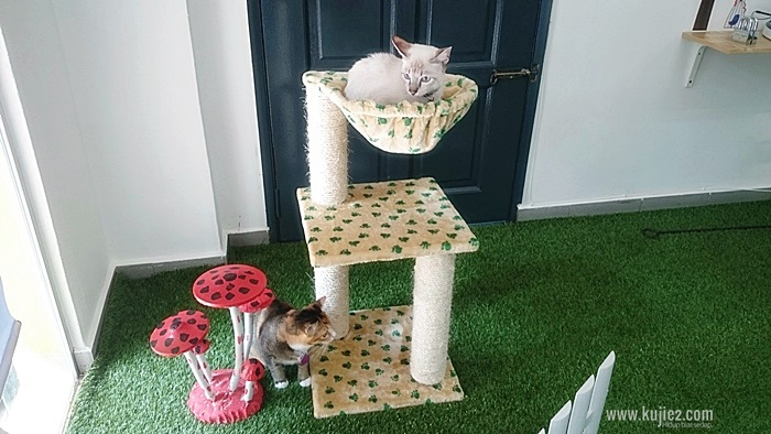 cat boardingKEADAAN CAT BOARDING