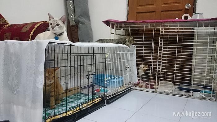 cara jaga kucing sakit