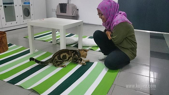 Cathoot – Hotel Kucing Di Kota Damansara