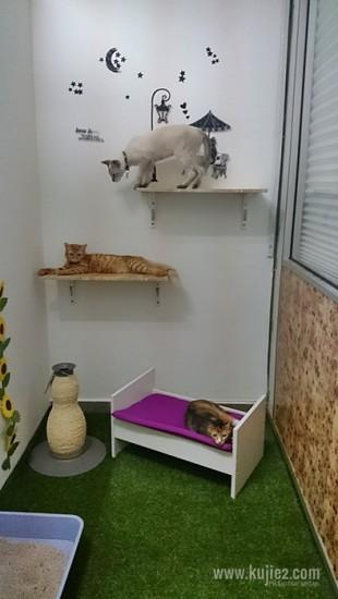 keadaan bilik hotel kucing