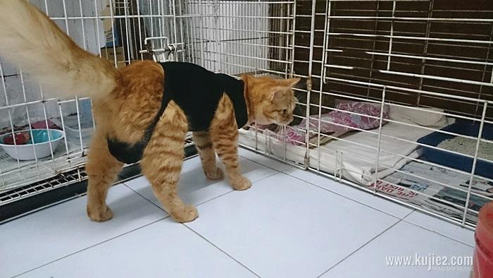 kucing operation2015-05-17 08.01.38