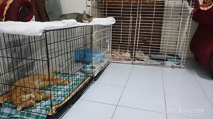 Rawat Kucing Sakit