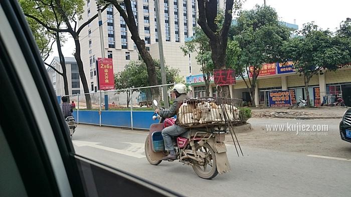 anjing di china