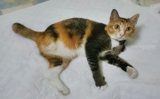 Fakta Mengenai Kucing Betina Berbulu Oren