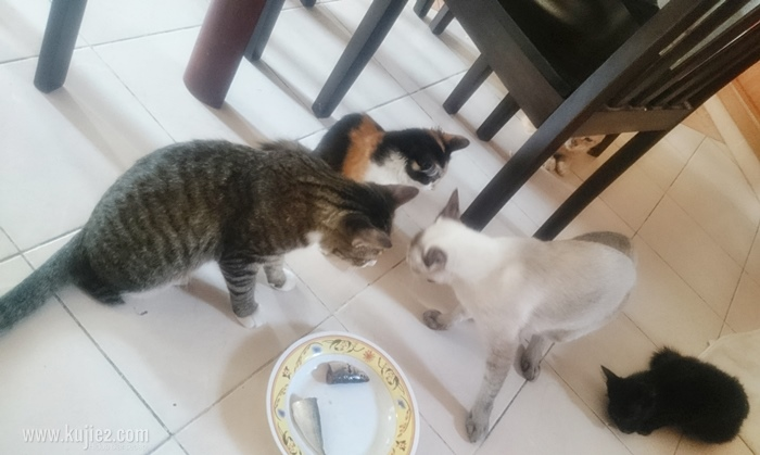 kenapa kucing tak makan ikan
