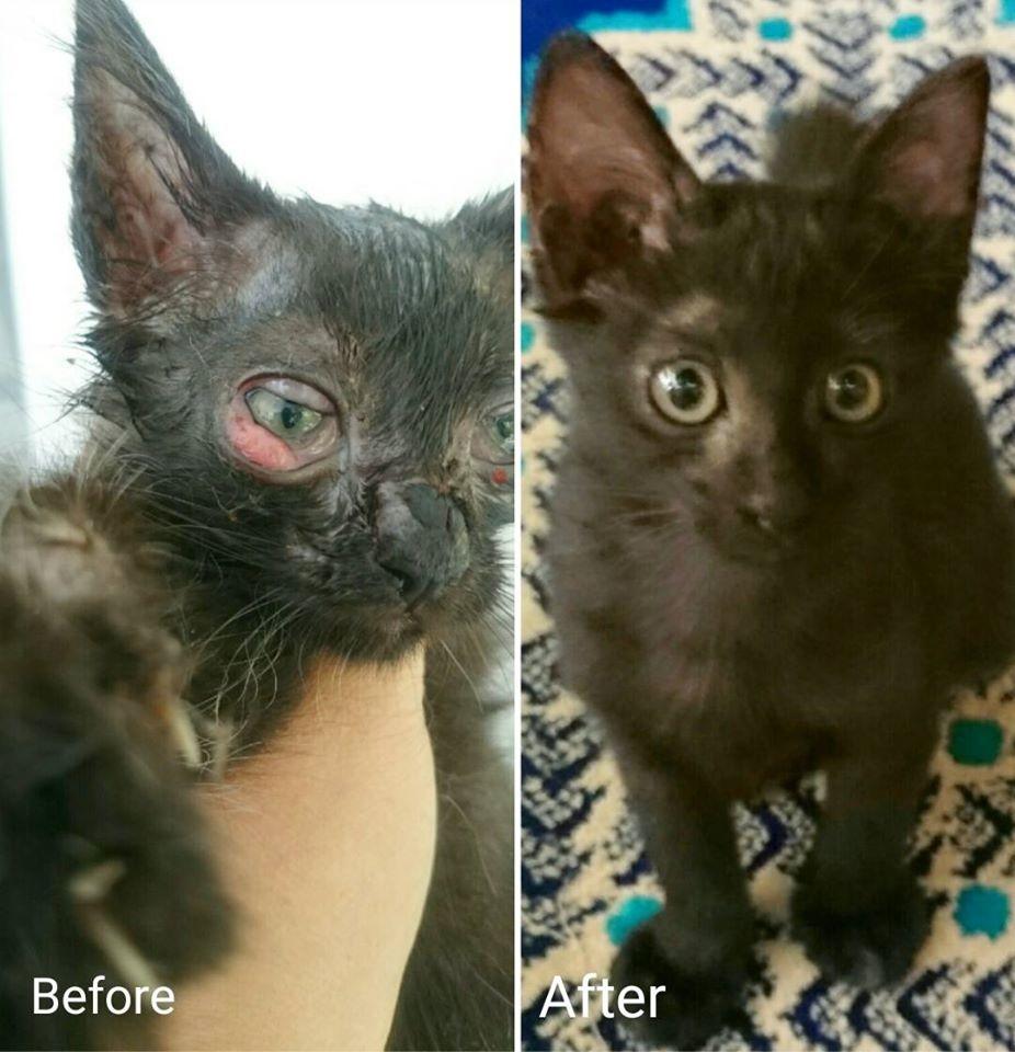 Ubat Sakit Mata Kucing Kujie2 Com